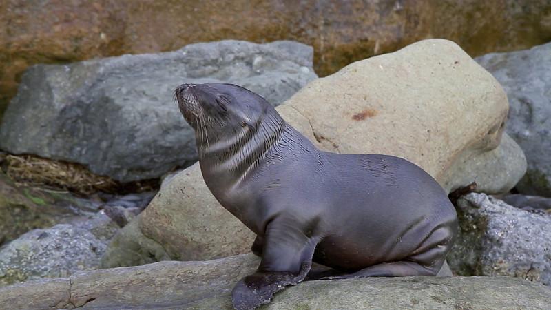20110125-Sea-Lion-Pup