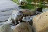 20110125_Sea_Lion_Pup_07