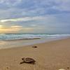 Sea Turtle HDR 022