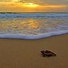 Sea Turtle HDR 010