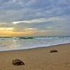 Sea Turtle HDR 021