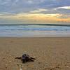 Sea Turtle HDR 024