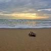 Sea Turtle HDR 011