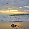 Sea Turtle HDR 014