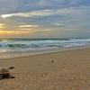 Sea Turtle HDR 019