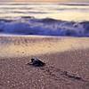 Sea Turtle HDR 027