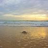Sea Turtle HDR 012