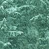 Blizzard Greens