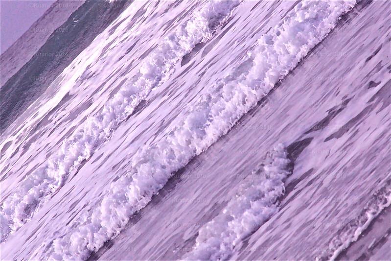 Lavender Edge