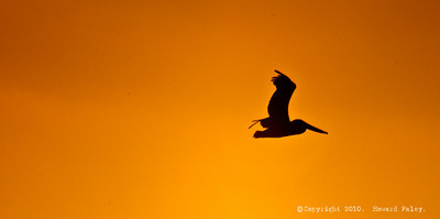 """Silhouette in the Sky"", Pelican, Carlsbad, CA 08/26/10."