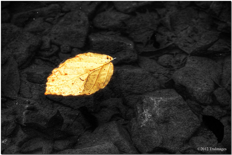 Nov 2<br /> The leaf<br /> <br /> Just a simple little leaf, floating quietly in a pool of water.<br /> <br /> Much appreciation to all who commented on yesterday's photo!!!