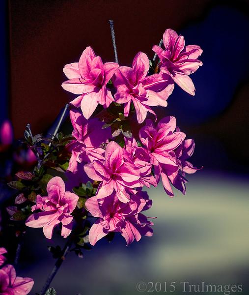 Fall Flower Power