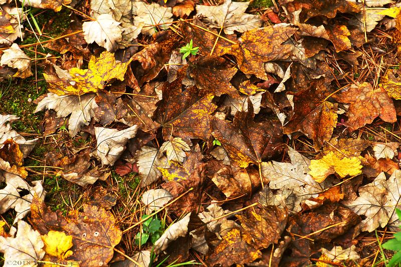 Fallen Fall Color