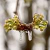 Winters grip
