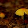 Mushroom Duet