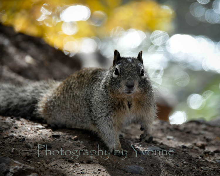 A ground squirrel is looking for a hand out!