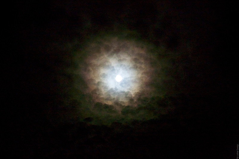 Mondsüchtig 1