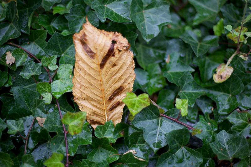 Herbst 7