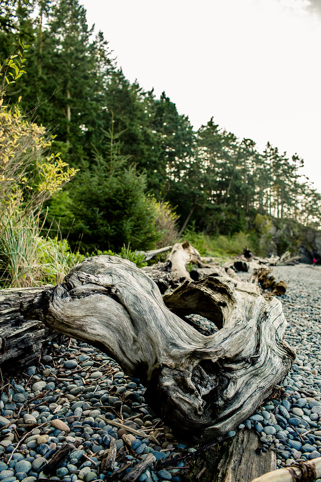 Driftwood on the beach at Deception Pass