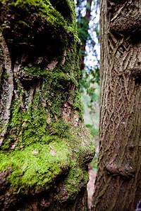 Seattle Arboretum-38