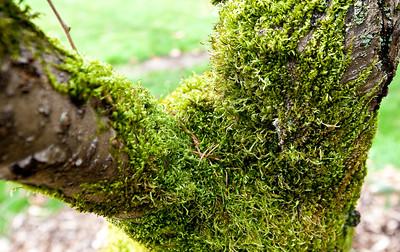 Seattle Arboretum-2