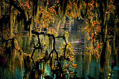 Through the Spanish moss reflections on a pond in Arlie Gardens in Wilmington, North Carolina