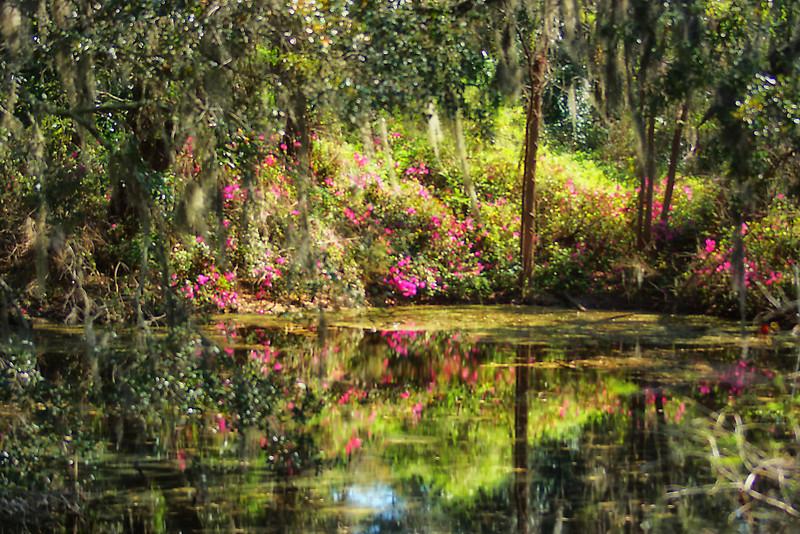 Arlie Gardens swamp scene in Wilmington, NC in an impressionistic edit.