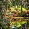 Arlie Gardens swamp scene in Wilmington, NC in an impressionistic edit.
