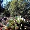 Cactus Near Sedona Arizona
