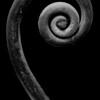 Spiral 2 (B&W)