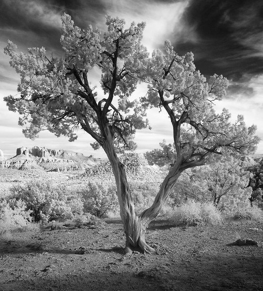 Tree and Buttes 2