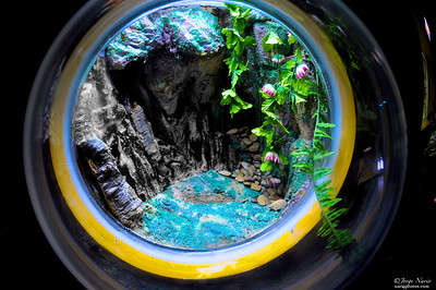 """Aquarico Fluvial"" (an Aquarium dedicated to rivers in the world and their aquatic wildlife)"