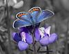TM Selective Color Butterfly05  copy