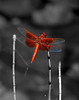 Dragon Fly copy