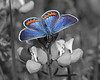 TM Selective Color Butterfly06