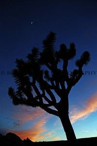 Joshua Tree National Park at sunset.