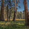 Round Meadow-SNP_0916__DSC3059