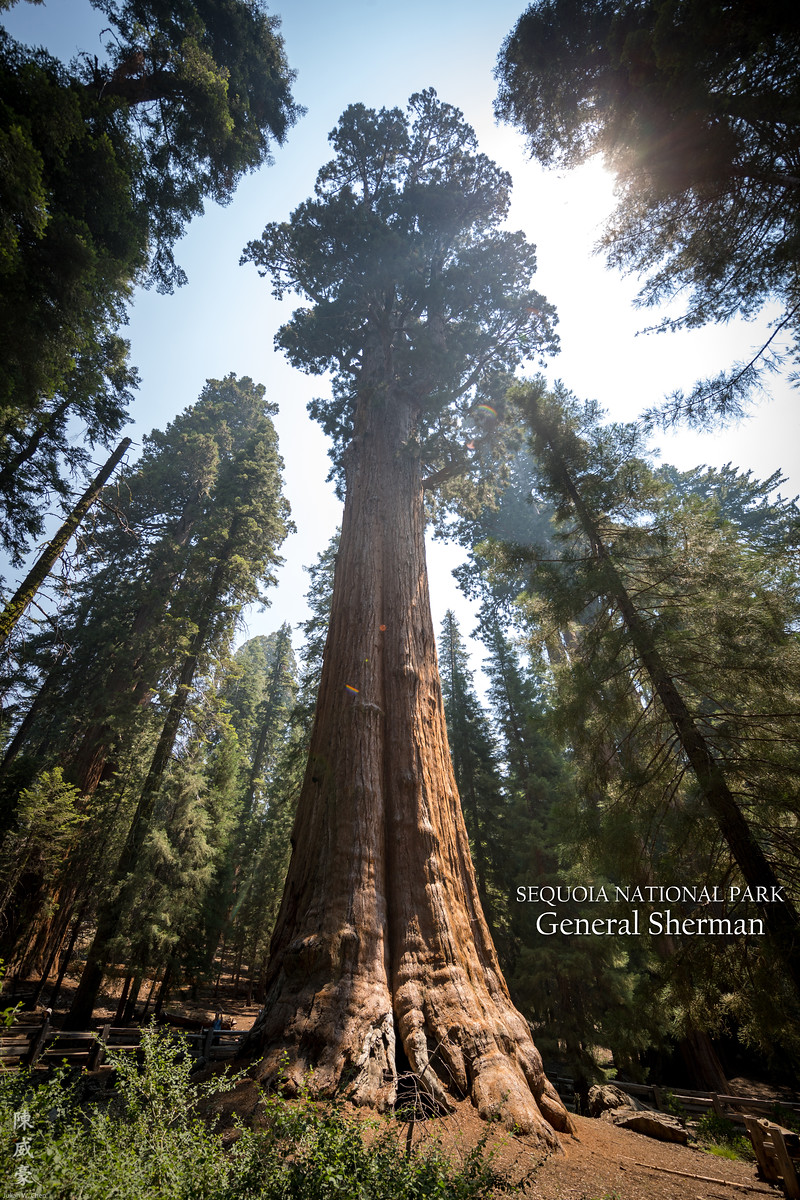 IMAGE: https://photos.smugmug.com/Photography/Sequoia-National-Park/i-XGrjj2M/0/774d714d/X3/20180728-Canon%20EOS-1D%20X%20Mark%20II-1DX29659-X3.jpg