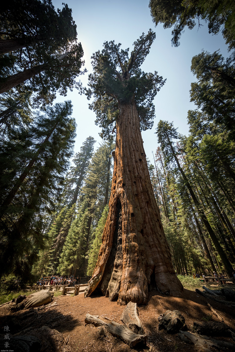 IMAGE: https://photos.smugmug.com/Photography/Sequoia-National-Park/i-b9XCBbz/0/3d0b1738/X3/20180728-Canon%20EOS-1D%20X%20Mark%20II-1DX29713-X3.jpg