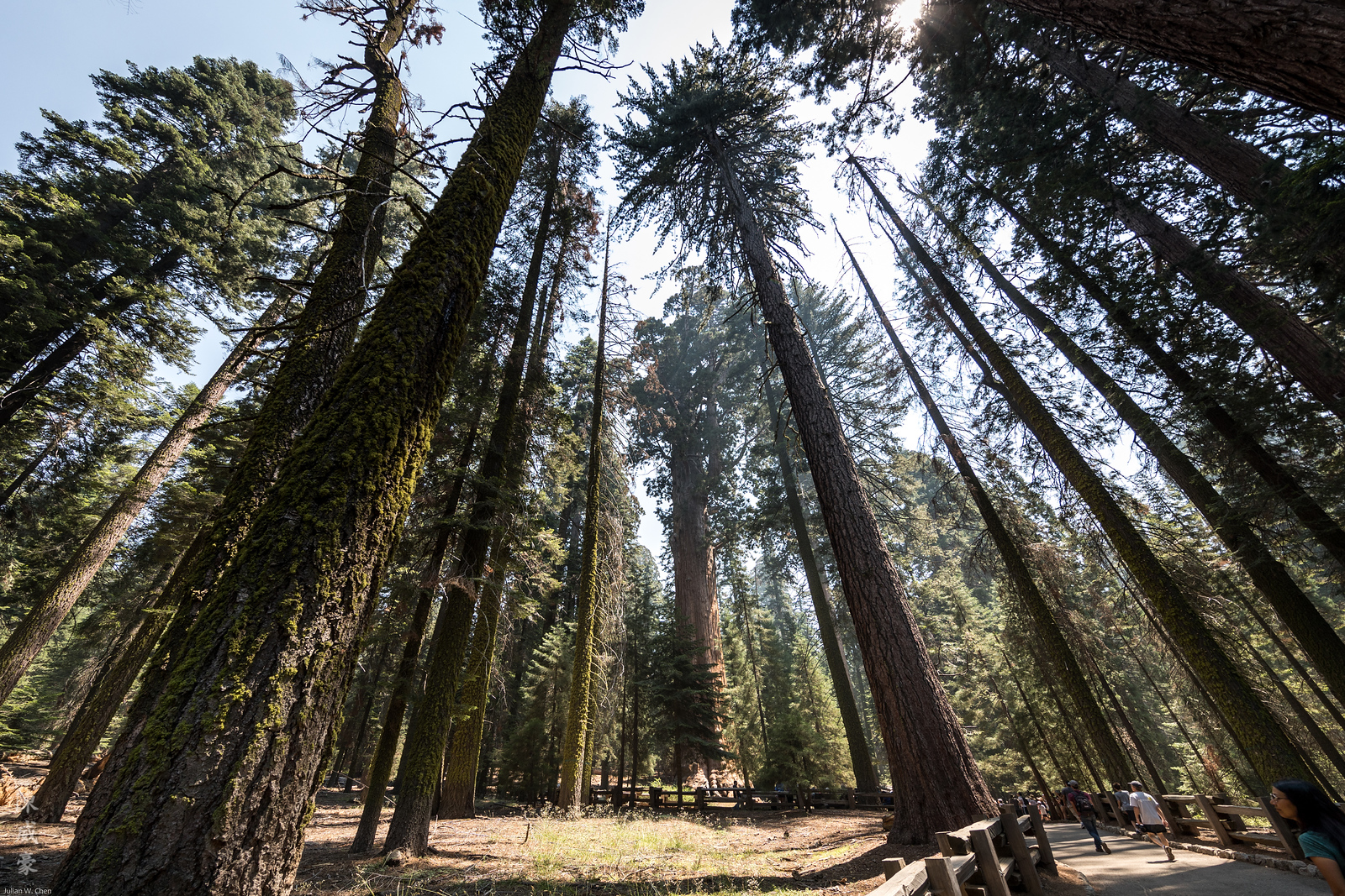IMAGE: https://photos.smugmug.com/Photography/Sequoia-National-Park/i-pJQtqLk/0/3f0b08c0/X3/20180728-Canon%20EOS-1D%20X%20Mark%20II-1DX29633-X3.jpg