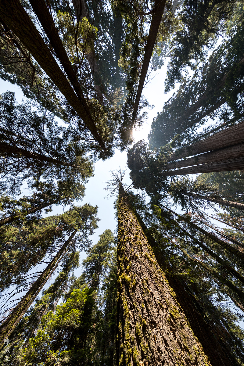 IMAGE: https://photos.smugmug.com/Photography/Sequoia-National-Park/i-pLXDzC2/0/41aeed98/X3/20180728-Canon%20EOS-1D%20X%20Mark%20II-1DX29630-X3.jpg