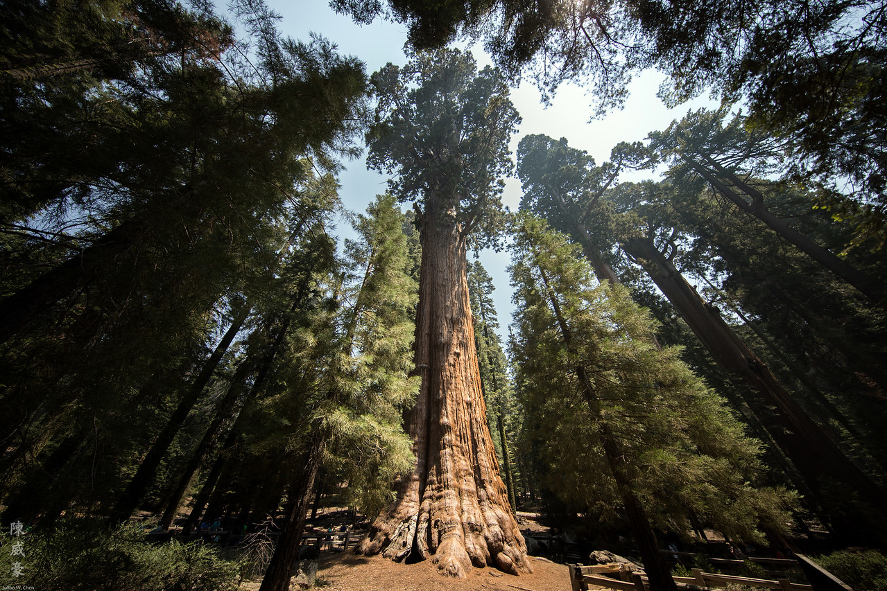IMAGE: https://photos.smugmug.com/Photography/Sequoia-National-Park/i-qcpknBS/0/db231892/X2/20180728-Canon%20EOS-1D%20X%20Mark%20II-1DX29673-X2.jpg