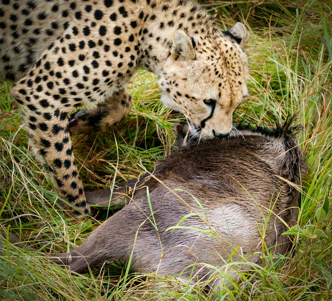 Fresh Kill, Masai Mara