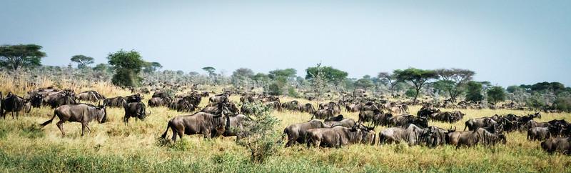 Migration #6, Serengeti
