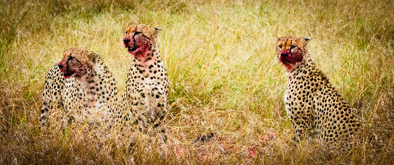Red Faces, Masai Mara