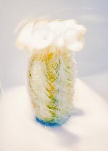 Mammillaria Prescottia