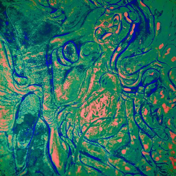 Colored Ice XX