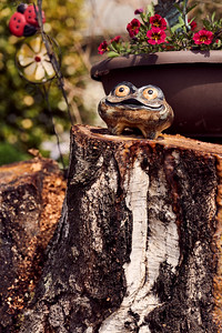 Frog on a tree stump