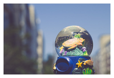 Found this undersea water globe, featuring a sea turtle, sitting atop a sign in The Junction, West Seattle.