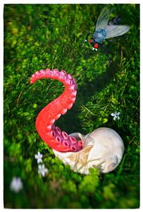 Pinky vs. The Pesky Fly